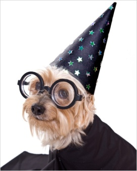 dog-dressed-as-harry-potter-character_qbl2tn