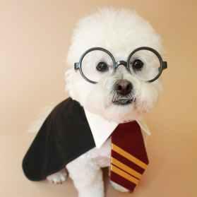 harry-potter-dog-costume2