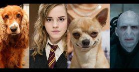 harry-potter-dog-image