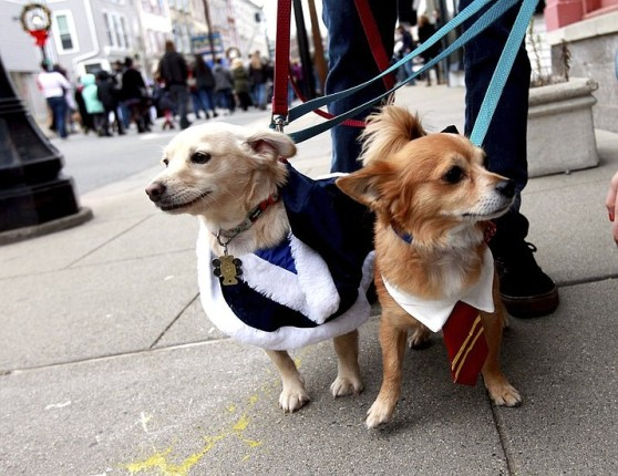 Harry_Potter_dogs_t715